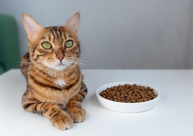 Schattige bengaalse kat in de buurt van kom met droog voedsel thuis.