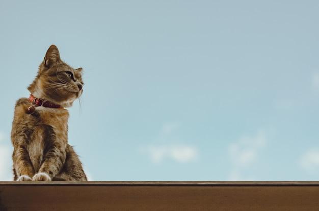Schattige bruine binnenlandse kattenzitting op het dak