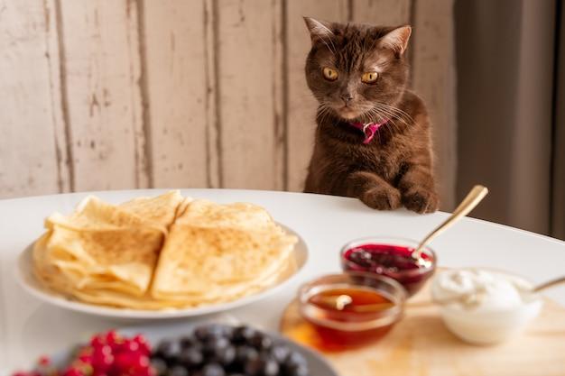 Schattige bruine kat kijken naar smakelijke zelfgemaakte pannenkoeken op plaat met verse bessen, jam, honing en sourcream op tafel