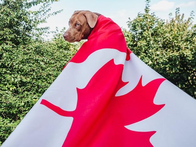 Schattige bruine puppy met canadese vlag