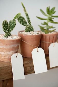 Schattige cactussen in terracotta potten met blanco papieren etiketten