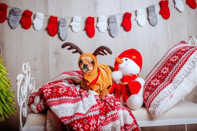 Schattige chihuahua in een rendierkostuum met grote ogen ligt op een bed