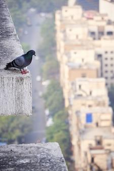 Schattige duif staande op de rand van een blok beton