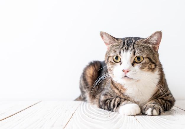 Schattige en grijze kat