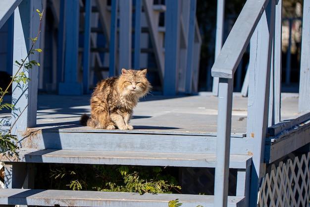 Schattige en pluizige kleurrijke kat op de veranda