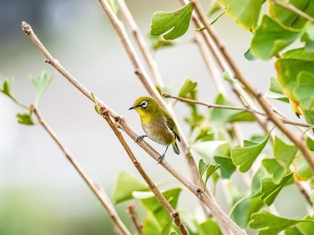 Schattige exotische vogel staande op een boomtak in het midden van een bos