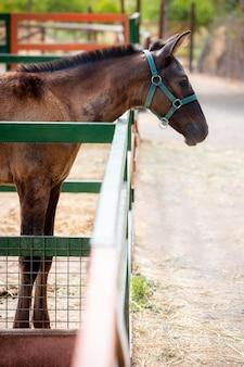 Schattige ezel buiten op de boerderij