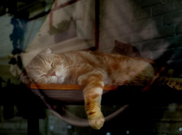Schattige gele kat slaapt voor een raam en ziet haar spiegelbeeld in het raam