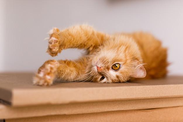 Schattige gember kat in kartonnen doos op verdieping thuis