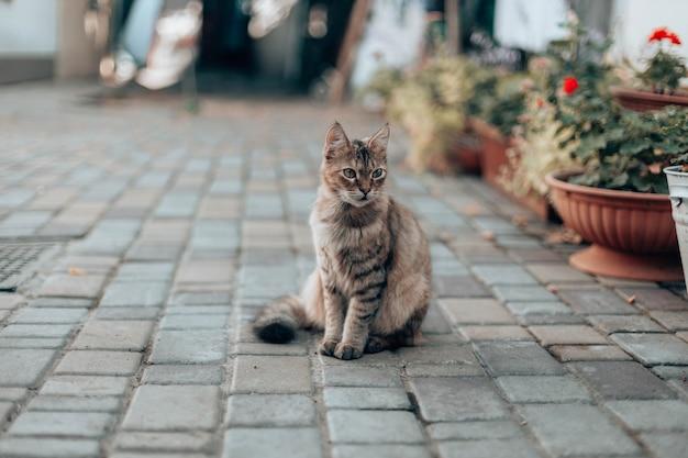 Schattige gestreepte kat zit op straat in de buurt van het huis tussen bloemen