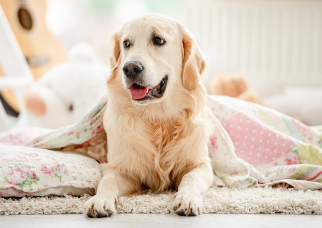 Schattige golden retriever bedekt met deken in kinderkamer