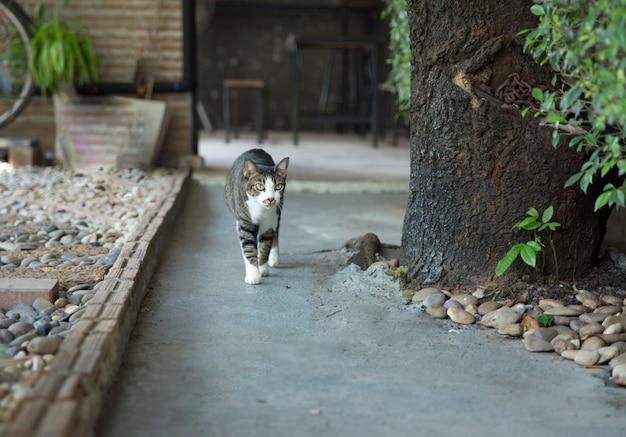 Schattige grijze felis of katten spelen op de vloer, selectieve focus