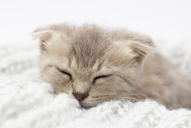 Schattige grijze grappige kitten slaap in grijze doek