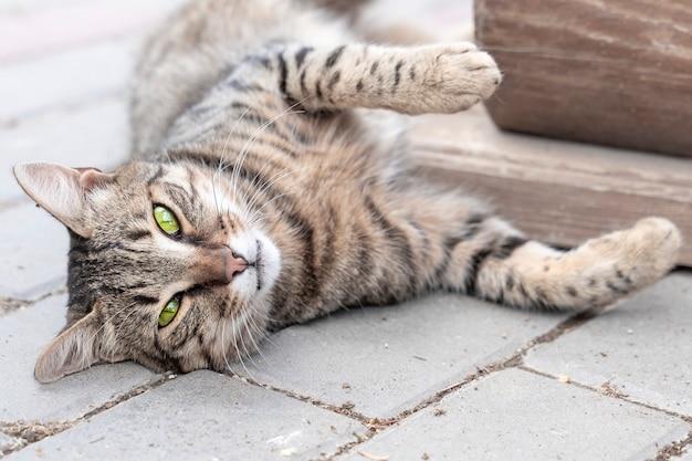 Schattige grijze kat met groene ogen ligt buiten en kijkt naar de camera