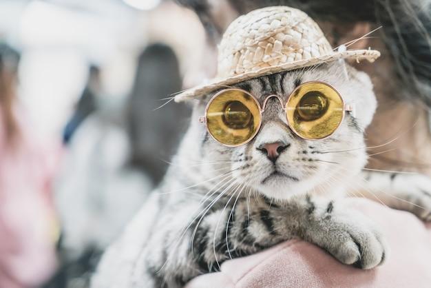 Schattige grijze kat met zonnebril en hoed
