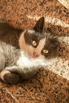 Schattige grijze kat rolt op de trap