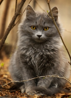 Schattige grijze kat spelen in de tuin