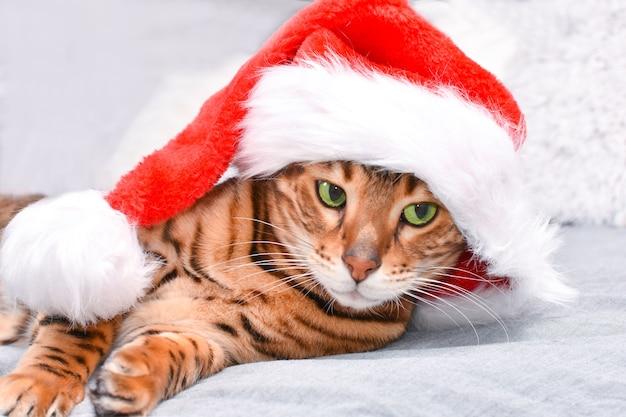 Schattige groenogige, gevlekte bengaalse kat in rode kerstmuts liggend op bed camera kijken op grijs