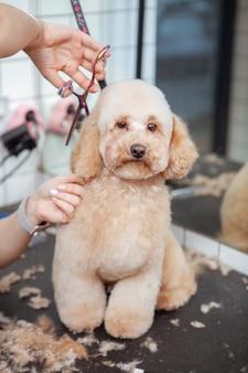 Schattige hond bij een huisdierensalon