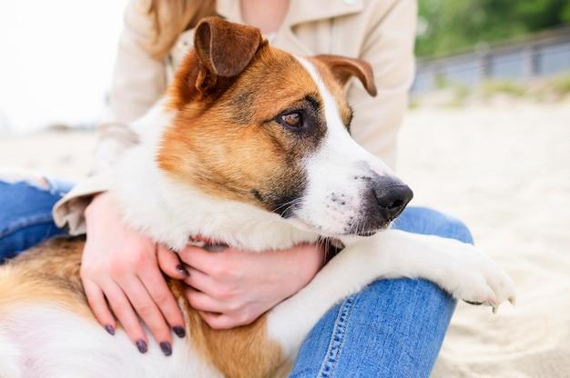 Schattige hond die van tijd in de aard geniet