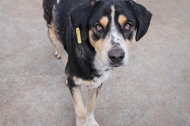 Schattige hond in een opvangcentrum te wachten om door iemand te worden geadopteerd