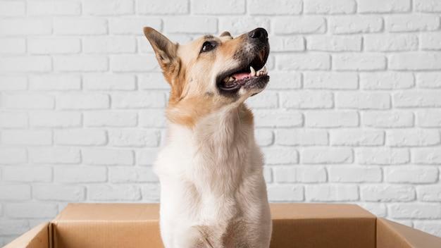 Schattige hond in kartonnen doos