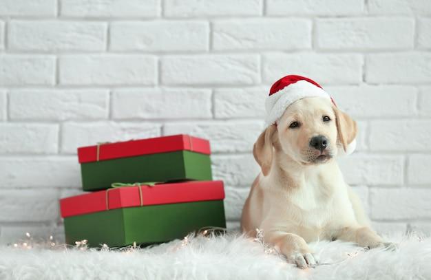Schattige hond in kerstman hoed liggend op de vloer in de buurt van kerstcadeaus tegen witte bakstenen muur