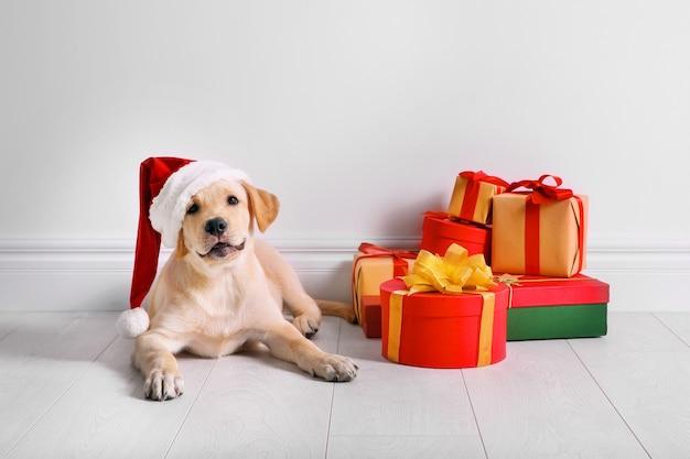 Schattige hond in kerstman hoed liggend op de vloer in de buurt van kerstcadeaus