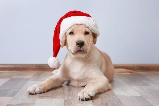 Schattige hond in kerstman hoed liggend op de vloer thuis