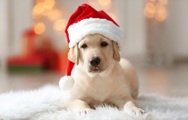 Schattige hond in kerstman hoed liggend op pluizig tapijt thuis