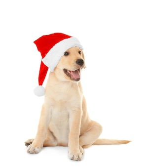 Schattige hond in kerstman hoed op witte achtergrond