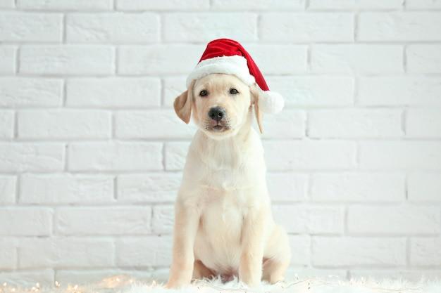 Schattige hond in kerstman hoed zittend op de vloer in de buurt van witte bakstenen muur