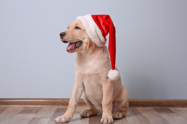 Schattige hond in kerstman hoed zittend op de vloer thuis