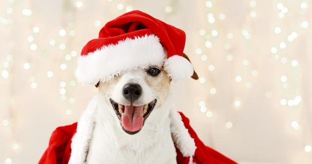 Schattige hond in kostuum voor kerstviering