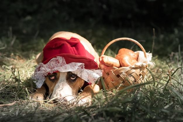 Schattige hond in sprookjesachtig halloween kostuum van kleine rode pet. portret van puppy poseren in rood rijden hoold glb en mand met gebak op groene bos achtergrond