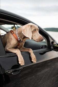 Schattige hond kijkt uit het raam