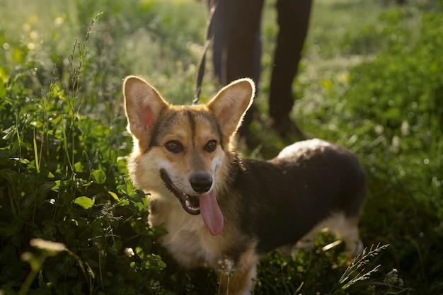Schattige hond met baasje in de natuur