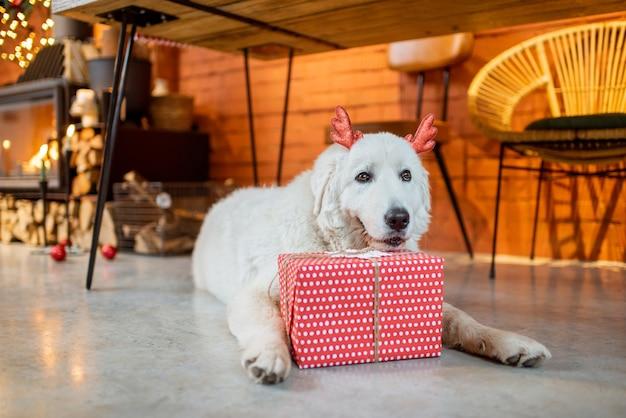 Schattige hond met een cadeau tijdens de nieuwjaarsvakantie thuis