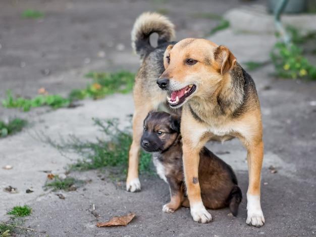 Schattige hond met een kleine pup buiten spelen