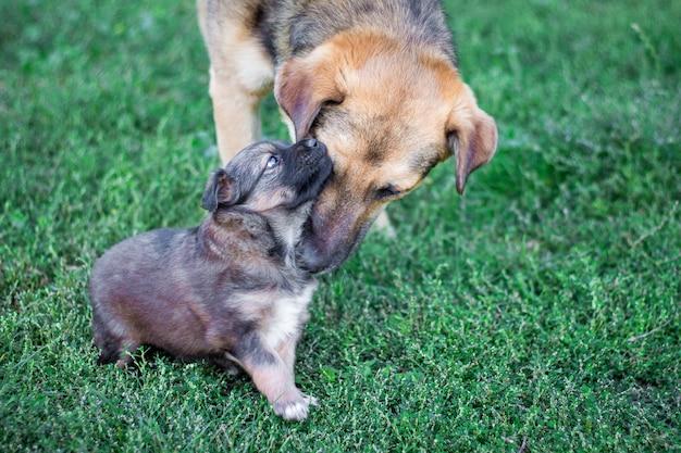 Schattige hond met een kleine pup spelen in het gras