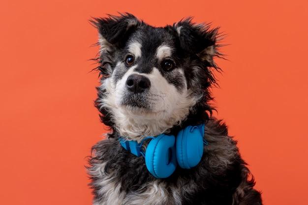 Schattige hond met een koptelefoon op de nek