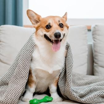 Schattige hond met speelgoed onder deken
