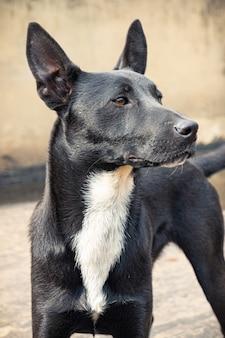 Schattige hond met zijn oren omhoog in bogotá colombia