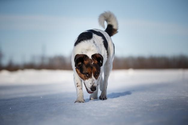 Schattige hond op wandeling in de natuur in de winter veld.