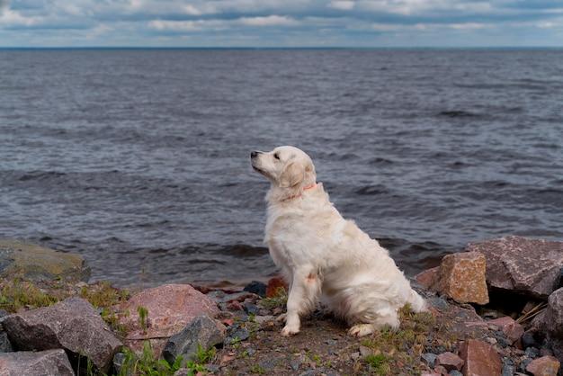 Schattige hond zittend aan het water