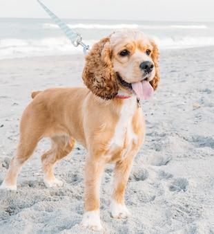 Schattige huisdieren hond wandelen op zandstrand concept van leuk tijdverdrijf met hond in de zomer