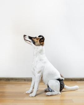 Hondenverzorging-beelden | Gratis vectoren, stockfoto's & PSD's