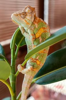 Schattige kameleon op plant