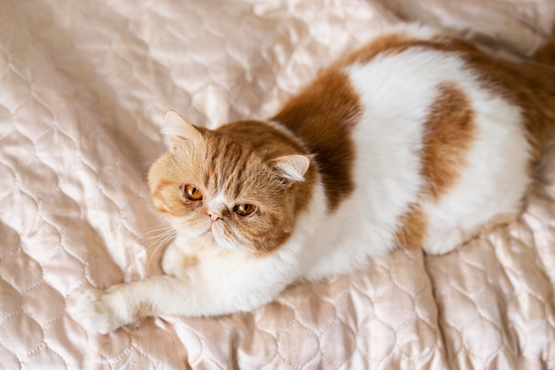 Schattige kat die op bed ligt