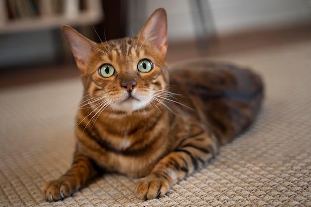 Schattige kat die op de vloer ligt Premium Foto